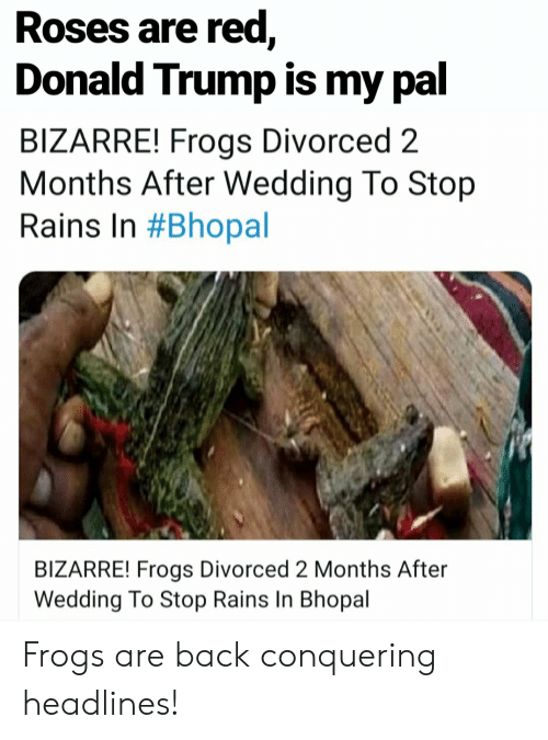 Donald Trump, Trump, and Wedding: Roses are red,  Donald Trump is my pal  BIZARRE! Frogs Divorced 2  Months After Wedding To Stop  Rains In #Bhopal  BIZARRE! Frogs Divorced 2 Months After  Wedding To Stop Rains In Bhopal Frogs are back conquering headlines!