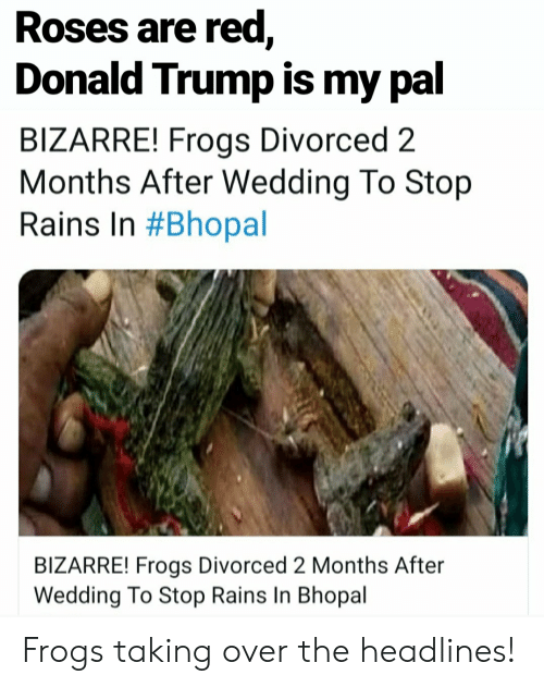 Donald Trump, Reddit, and Trump: Roses are red,  Donald Trump is my pal  BIZARRE! Frogs Divorced 2  Months After Wedding To Stop  Rains In #Bhopal  BIZARRE! Frogs Divorced 2 Months After  Wedding To Stop Rains In Bhopal Frogs taking over the headlines!