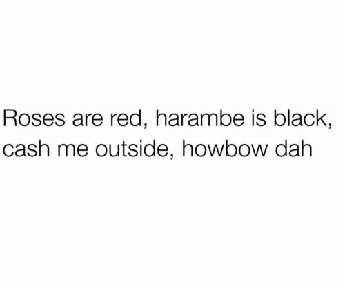 Haramber: Roses are red, harambe is black,  cash me outside, howbow dah