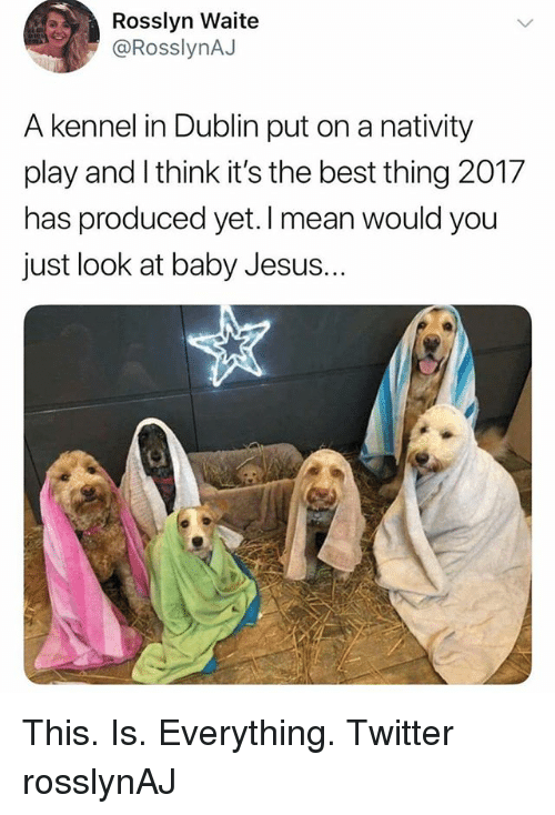 nativity: Rosslyn Waite  @RosslynAJ  A kennel in Dublin put on a nativity  play and I think it's the best thing 2017  has produced yet. I mean would you  just look at baby Jesus. This. Is. Everything. Twitter rosslynAJ