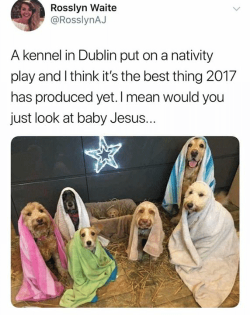 nativity: Rosslyn Waite  @RosslynAJ  A kennel in Dublin put on a nativity  play and I think it's the best thing 2017  has produced yet. I mean would you  just look at baby Jesus.