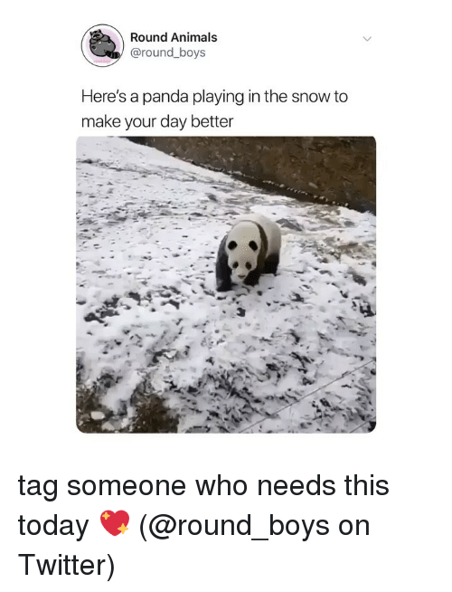 Animals, Memes, and Twitter: Round Animals  @round_boys  Here's a panda playing in the snow to  make your day better tag someone who needs this today 💖 (@round_boys on Twitter)