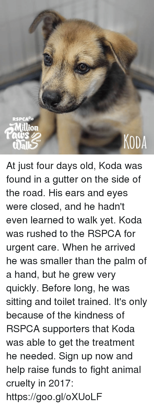 Memes, Animal, and Help: RSPCA  illion  KODA  2017 At just four days old, Koda was found in a gutter on the side of the road. His ears and eyes were closed, and he hadn't even learned to walk yet. Koda was rushed to the RSPCA for urgent care.   When he arrived he was smaller than the palm of a hand, but he grew very quickly. Before long, he was sitting and toilet trained.  It's only because of the kindness of RSPCA supporters that Koda was able to get the treatment he needed.   Sign up now and help raise funds to fight animal cruelty in 2017: https://goo.gl/oXUoLF