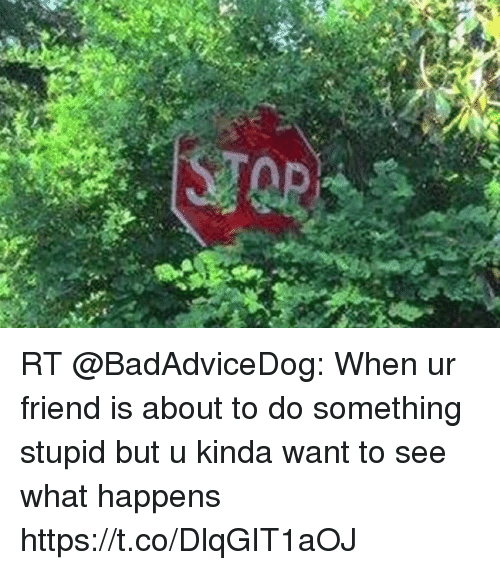 Memes, 🤖, and Friend: RT @BadAdviceDog: When ur friend is about to do something stupid but u kinda want to see what happens https://t.co/DlqGIT1aOJ