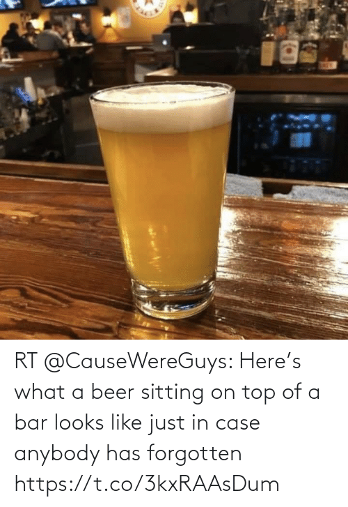 Beer: RT @CauseWereGuys: Here's what a beer sitting on top of a bar looks like just in case anybody has forgotten https://t.co/3kxRAAsDum