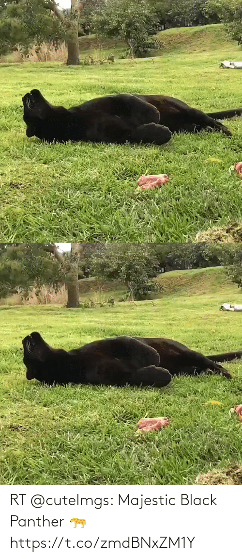 Black Panther: RT @cutelmgs: Majestic Black Panther 🐆 https://t.co/zmdBNxZM1Y