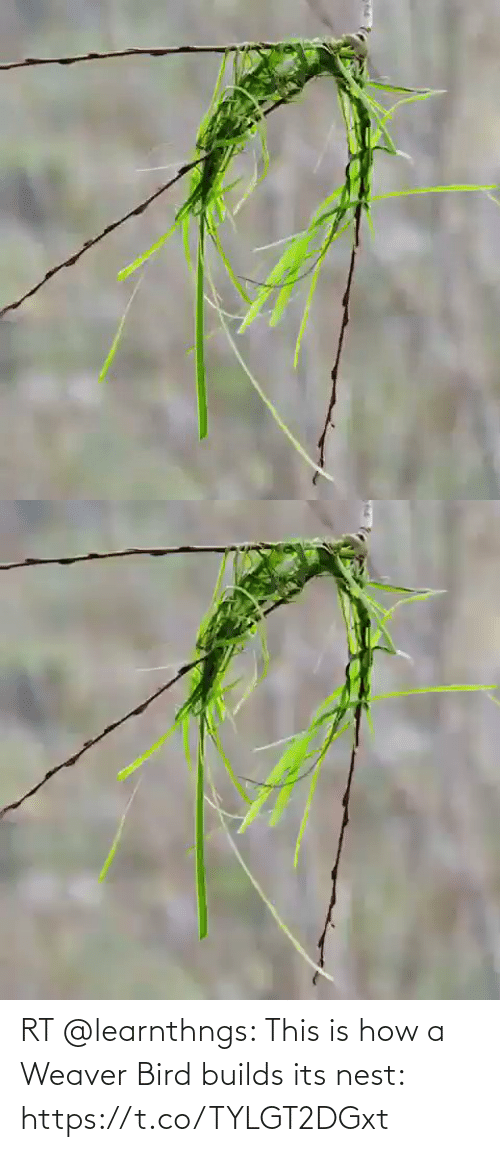 Nest: RT @learnthngs: This is how a Weaver Bird builds its nest: https://t.co/TYLGT2DGxt