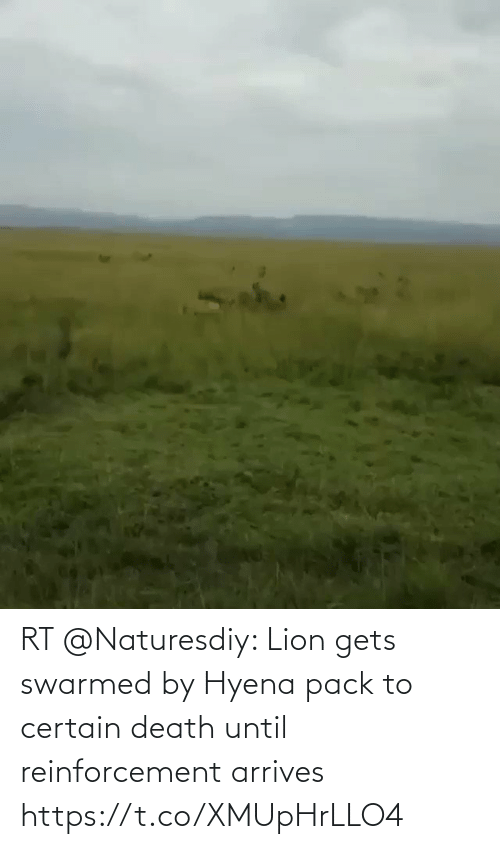 Reinforcement: RT @Naturesdiy: Lion gets swarmed by Hyena pack to certain death until reinforcement arrives https://t.co/XMUpHrLLO4