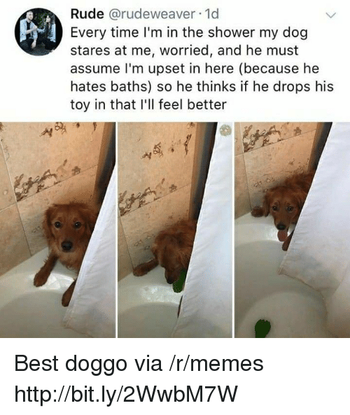 Baths: Rude @rudeweaver 1d  Every time I'm in the shower my dog  stares at me, worried, and he must  assume l'm upset in here (because he  hates baths) so he thinks if he drops his  toy in that I'll feel better Best doggo via /r/memes http://bit.ly/2WwbM7W