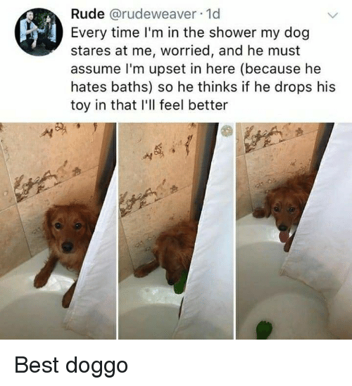 Baths: Rude @rudeweaver 1d  Every time I'm in the shower my dog  stares at me, worried, and he must  assume l'm upset in here (because he  hates baths) so he thinks if he drops his  toy in that I'll feel better Best doggo
