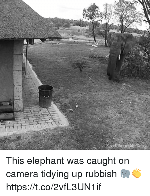 Memes, Camera, and Elephant: Russell MaclabghlinCate This elephant was caught on camera tidying up rubbish 🐘👏 https://t.co/2vfL3UN1if