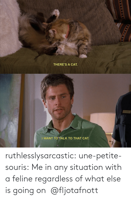 Situation: ruthlesslysarcastic:  une-petite-souris: Me in any situation with a feline regardless of what else is going on  @fljotafnott