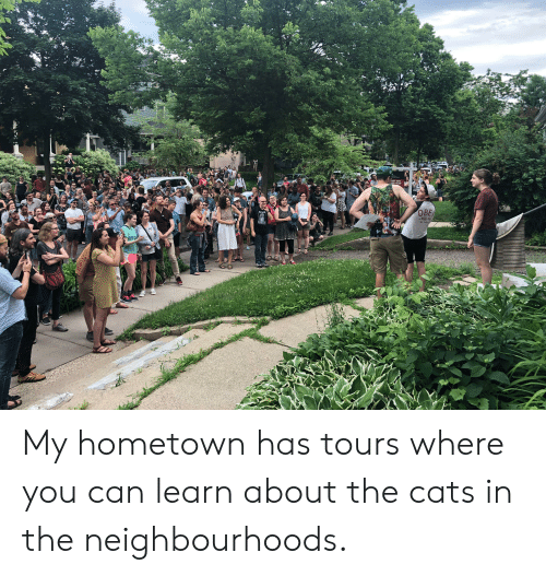 obe: RWLLIAMS  IANCE VORK  -396-4046  SKA  NOT  DEAD  OBE  LOST CAT  TEA  NO 4520  PPROACH My hometown has tours where you can learn about the cats in the neighbourhoods.
