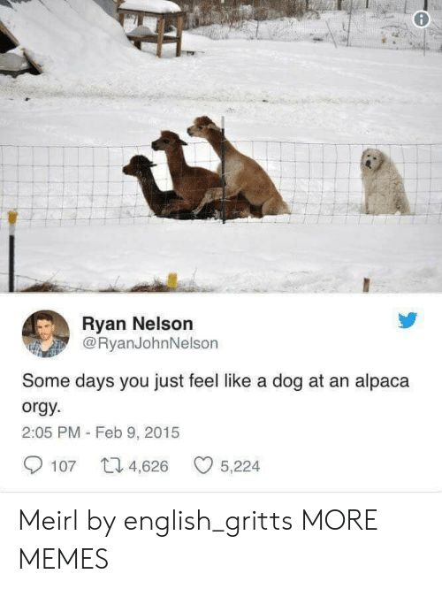 nelson: Ryan Nelson  @RyanJohnNelson  Some days you just feel like a dog at an alpaca  orgy  2:05 PM - Feb 9, 2015  107 4,626 5,224 Meirl by english_gritts MORE MEMES
