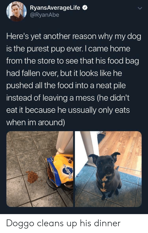 Food, Home, and Reason: RyansAverageLife  @RyanAbe  Here's yet another reason why my dog  is the purest pup ever.Icame home  from the store to see that his food bag  had fallen over, but it looks like he  pushed all the food into a neat pile  instead of leaving a mess (he didn't  eat it because he ussually only eats  when im around) Doggo cleans up his dinner