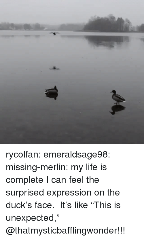 """Life, Target, and Tumblr: rycolfan: emeraldsage98:  missing-merlin: my life is complete I can feelthe surprised expression on the duck's face. It's like""""Thisis unexpected,""""  @thatmysticbafflingwonder!!!"""