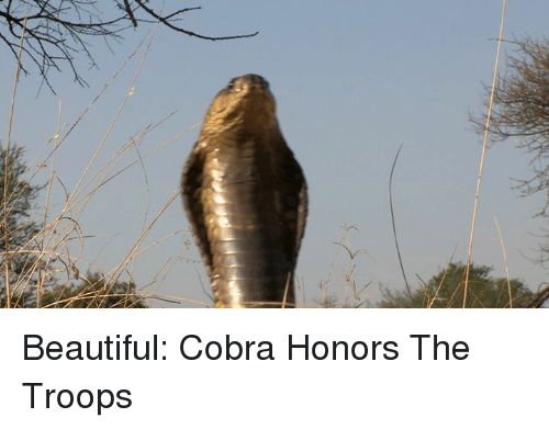 the troop: s Beautiful: Cobra Honors The Troops