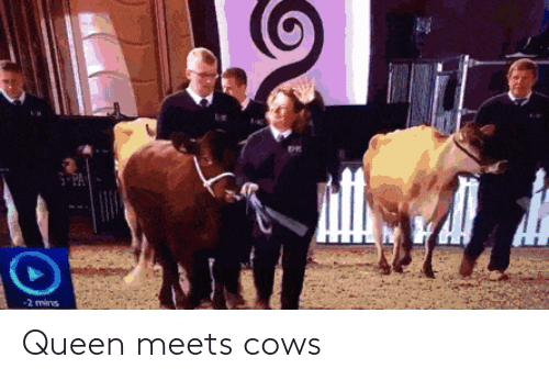 Mins: S-PA  -2 mins Queen meets cows