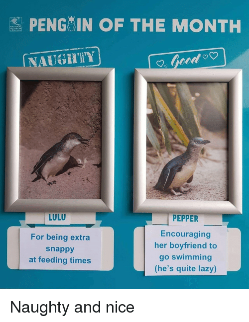 encouraging: S PENG IN OF THE MONTH  NATIONA  AQUARIUM  NAUGHIY  LULU  For being extra  snappy  at feeding times  PEPPER  Encouraging  her boyfriend to  go swimming  (he's quite lazy) Naughty and nice