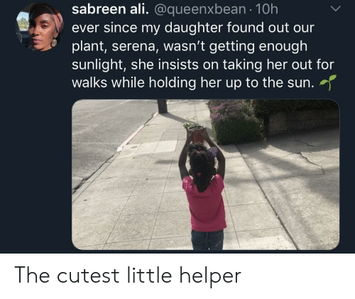 Helper: sabreen ali. @queenxbean 10h  ever since my daughter found out our  plant, serena, wasn't getting enough  sunlight, she insists on taking her out for  walks while holding her up to the sun.  her up to the sun. The cutest little helper