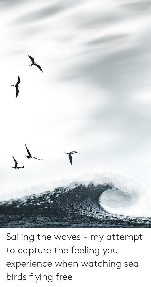 birds flying: Sailing the waves - my attempt to capture the feeling you experience when watching sea birds flying free