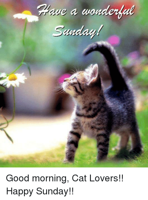 Sanday Good Morning Cat Lovers Happy Sunday Cats Meme On