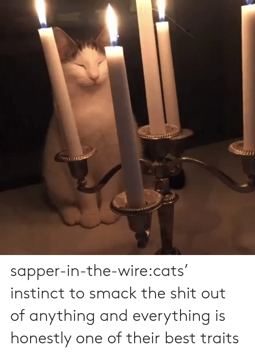 smack: sapper-in-the-wire:cats' instinct to smack the shit out of anything and everything is honestly one of their best traits