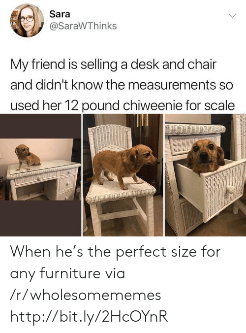 Desk, Furniture, and Http: Sara  @SaraWThinks  My friend is selling a desk and chair  and didn't know the measurements so  used her 12 pound chiweenie for scale When he's the perfect size for any furniture via /r/wholesomememes http://bit.ly/2HcOYnR