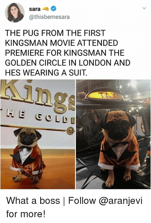 kingsman: sara-  @thisbemesara  THE PUG FROM THE FIRST  KINGSMAN MOVIE ATTENDED  PREMIERE FOR KINGSMAN THE  GOLDEN CIRCLE IN LONDON AND  HES WEARING A SUIT.  ing  HE GO LDE What a boss | Follow @aranjevi for more!