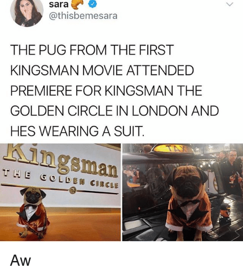 kingsman: sara  @thisbemesara  THE PUG FROM THE FIRST  KINGSMAN MOVIE ATTENDED  PREMIERE FOR KINGSMAN THE  GOLDEN CIRCLE IN LONDON AND  HES WEARING A SUIT  Kingsman  THE GOLDEN CIRCLE Aw