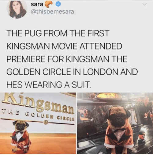 kingsman: sara  @thisbemesara  THE PUG FROM THE FIRST  KINGSMAN MOVIE ATTENDED  PREMIERE FOR KINGSMAN THE  GOLDEN CIRCLE IN LONDON AND  HES WEARING A SUIT.  Kingsman