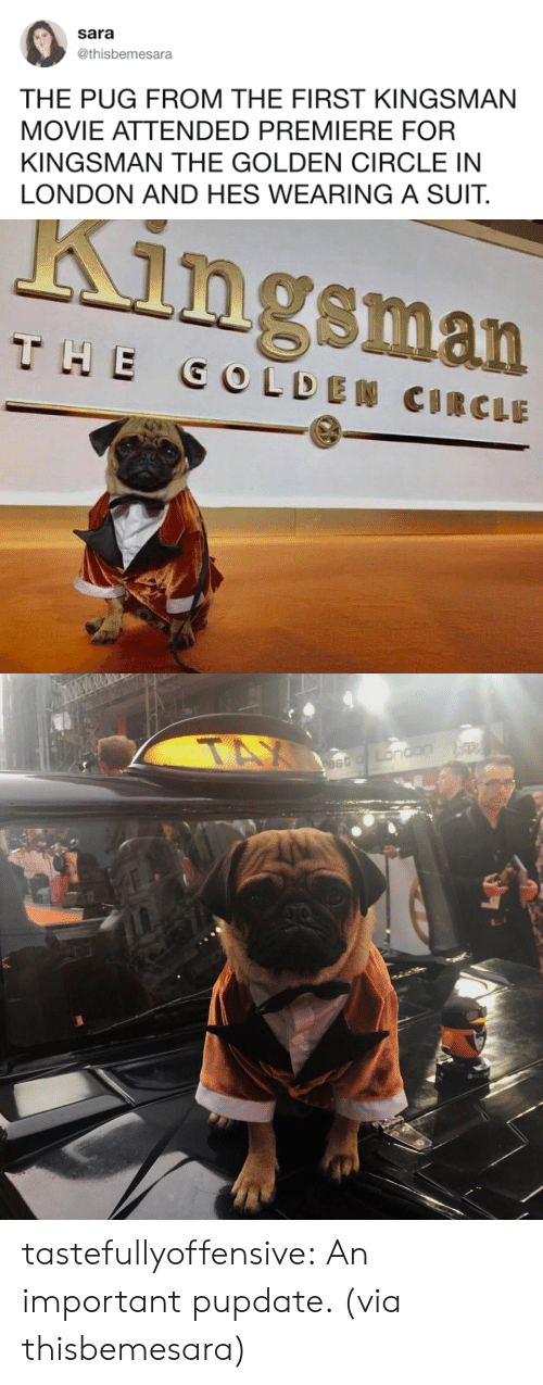 kingsman: Sara  @thisbemesara  THE PUG FROM THE FIRST KINGSMAN  MOVIE ATTENDED PREMIERE FOR  KINGSMAN THE GOLDEN CIRCLE IN  LONDON AND HES WEARING A SUIT.   Kingsman tastefullyoffensive:  An important pupdate. (via thisbemesara)