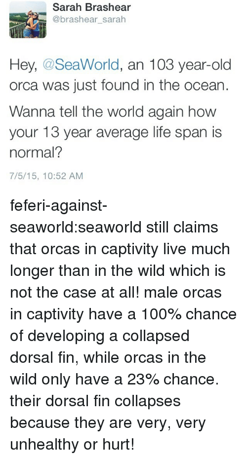 orca: Sarah Brashear  @brashear_sarah  Hey, @SeaWorld, an 103 year-old  orca was just found in the ocean  Wanna tell the world again how  your 13 year average life span is  normal?  7/5/15, 10:52 AM feferi-against-seaworld:seaworld still claims that orcas in captivity live much longer than in the wild which is not the case at all! male orcas in captivity have a 100% chance of developing a collapsed dorsal fin, while orcas in the wild only have a 23% chance. their dorsal fin collapses because they are very, very unhealthy or hurt!