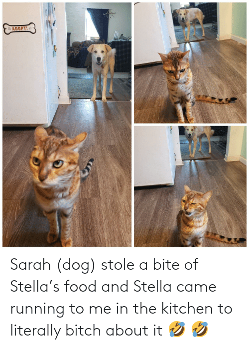 literally: Sarah (dog) stole a bite of Stella's food and Stella came running to me in the kitchen to literally bitch about it 🤣 🤣