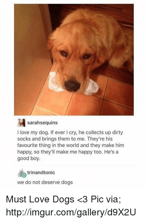 Memes, Dirty, and Imgur: sarahsequins  I love my dog. If ever I cry, he collects up dirty  socks and brings them to me. They're his  favourite thing in the world and they make him  happy, so they'll make me happy too. He's a  good boy.  trinand tonic  we do not deserve dogs Must Love Dogs <3   Pic via; http://imgur.com/gallery/d9X2U