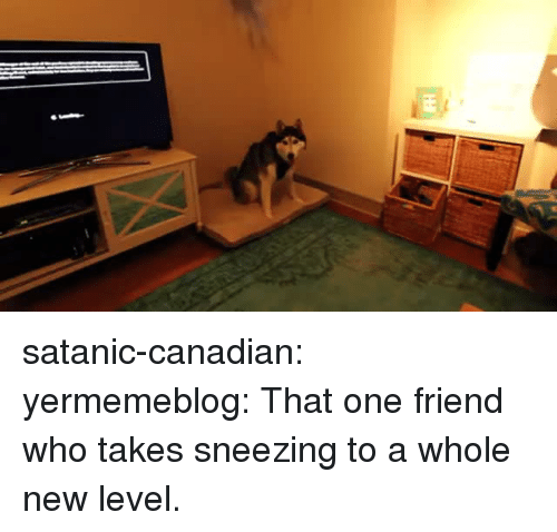 Gif, Tumblr, and Blog: satanic-canadian: yermemeblog: That one friend who takes sneezing to a whole new level.