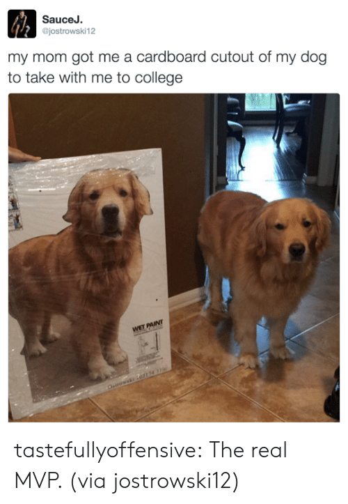 cardboard: SauceJ.  @jostrowski12  my mom got me a cardboard cutout of my dog  to take with me to college tastefullyoffensive:  The real MVP. (via jostrowski12)