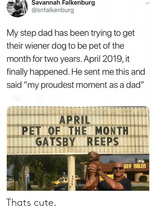 "Cute, Dad, and April: Savannah Falkenburg  @snfalkenburg  My step dad has been trying to get  their wiener dog to be pet of the  month for two years. April 2019, it  finally happened. He sent me this and  said ""my proudest moment as a dad""  APRIL  PET OF THE MONTH  GATSBY REEPS  ULY NOLEN Thats cute."