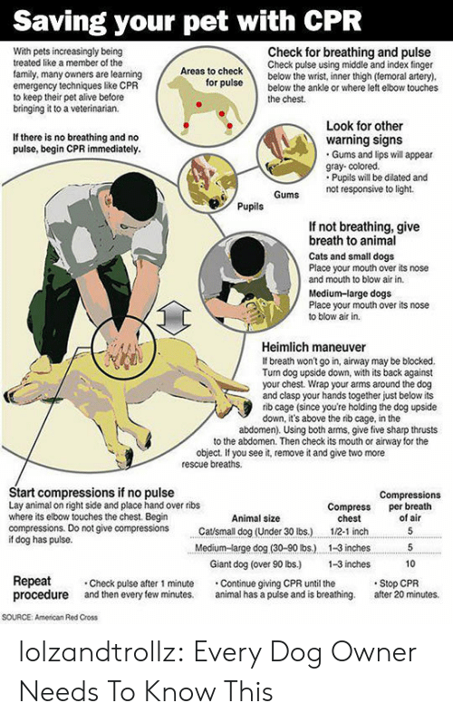 Alive, Cats, and Dogs: Saving your pet with CPR  Check for breathing and pulse  Check pulse using middle and index finger  below the wrist, inner thigh (temoral artery).  below the ankle or where left elbow touches  With pets increasingly being  treated like a member of the  Areas to check  family, many owners are learning  emergency techniques like CPR  to keep their pet alive before  bringing it to a veterinarian.  for pulse  the chest  Look for other  warning signs  Gums and lips will appear  gray- colored.  Pupils will be dilated and  not responsive to light  If there is no breathing and no  pulse, begin CPR immediately.  Gums  Pupils  If not breathing, give  breath to animal  Cats and small dogs  Place your mouth over its nose  and mouth to blow air in.  Medium-large dogs  Place your mouth over its nose  to blow air in  Heimlich maneuver  If breath won't go in, airway may be blocked.  Turn dog upside down, with its back against  your chest. Wrap your arms around the dog  and clasp your hands together just below its  rib cage (since you're holding the dog upside  down, it's above the rib cage, in the  abdomen). Using both arms, give five sharp thrusts  to the abdomen. Then check its mouth or airway for the  object. If you see it, remove it and give two more  rescue breaths  Start compressions if no pulse  Lay animal on right side and place hand over ribs  where its elbow touches the chest. Begin  compressions. Do not give compressions  if dog has pulse.  Compressions  per breath  of air  Compress  chest  Animal size  Catsmall dog (Under 30 lbs.)  5  1/2-1 inch  Medium-large dog (30-90 lbs.)  1-3 inches  5  Giant dog (over 90 lbs.)  1-3 inches  10  Repeat  procedure  Stop CPR  after 20 minutes.  Check pulse after 1 minute  and then every few minutes.  Continue giving CPR until the  animal has a puise and is breathing.  soURCE  American Red Cross lolzandtrollz:  Every Dog Owner Needs To Know This