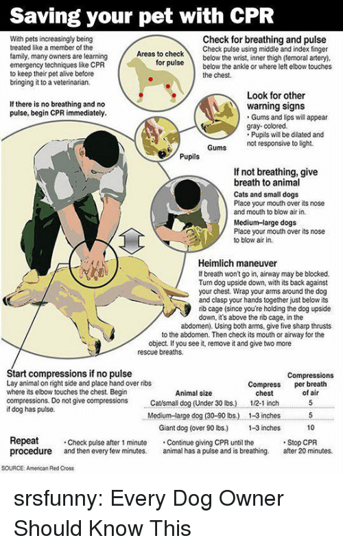 If You See It: Saving your pet with CPR  With pets increasingly being  treated like a member of the  family, many owners are learning  emergency techniques like CPR  to keep their pet alive before  bringing it to a veterinarian.  Check for breathing and pulse  Check pulse using middle and index finger  as to checkbelow the wrist, inner thigh (temoral artery)  ruse below the ankle or where left elbow touches  for  the chest.  Look for other  If there is no breathing and no  pulse, begin CPR immediately.  warning signs  Gums and lips will appear  gray- colored.  Pupils will be dilated and  not responsive to light.  Pupils  If not breathing, give  breath to animal  Cats and small dogs  Place your mouth over its nose  and mouth to blow air in.  Medium-large dogs  Place your mouth over its nose  to blow air in.  Heimlich maneuver  If breath won't go in, airway may be blocked.  Tun dog upside down, with its back against  your chest. Wrap your arms around the dog  and clasp your hands together just below its  rib cage (since you're holding the dog upside  down, it's above the rib cage, in the  abdomen). Using both arms, give five sharp thrusts  to the abdomen. Then check its mouth or airway for the  object. If you see it, remove it and give two more  rescue breaths.  Start compressions if no pulse  Lay animal on right side and place hand over ribs  where its elbow touches the chest. Begin  compressions. Do not give compressions tsmall dog (Under 30 lbs.)  if dog has pulse.  Compressions  Compress per breath  Animal size  chest  12-1 inch  of air  Medium-arge dog (30-90 lbs.) . 1-3 inches5  10  Giant dog (over 90 lbs) -3 inches  Repeat  procedure and then every few minutes. al has a pulse and is breathing. after 20 minutes.  Check pulse after 1 minute Continue giving CPR until the  Stop CPR  SOURCE: American Red Cross srsfunny:  Every Dog Owner Should Know This