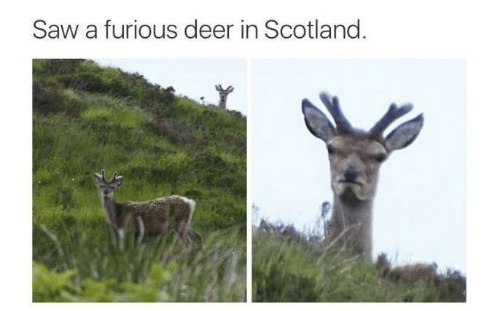 Scotland: Saw a furious deer in Scotland.