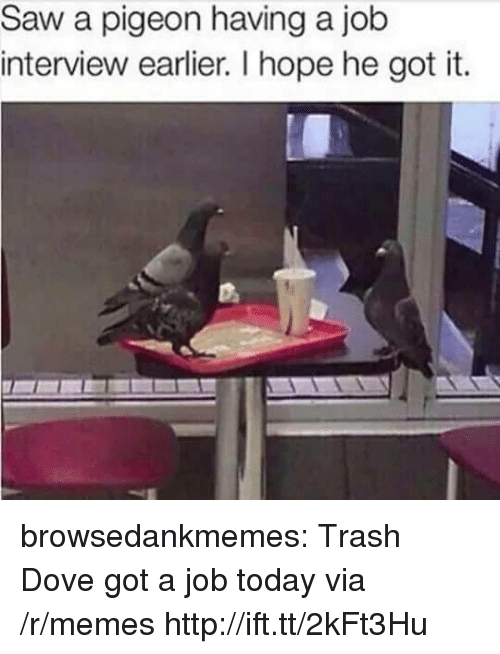 Trash Dove: Saw a pigeon having a job  interview earlier. I hope he got it. browsedankmemes:  Trash Dove got a job today via /r/memes http://ift.tt/2kFt3Hu