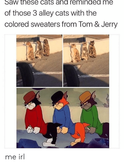 Cats, Saw, and Tom & Jerry: Saw these cats and reminded me  of those 3 alley cats with the  colored sweaters from Tom & Jerry me irl