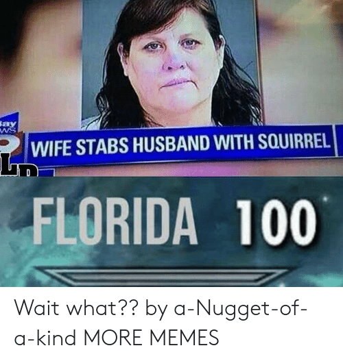 Dank, Memes, and Target: Say  WIFE STABS HUSBAND WITH SQUIRREL  FLORIDA 100 Wait what?? by a-Nugget-of-a-kind MORE MEMES