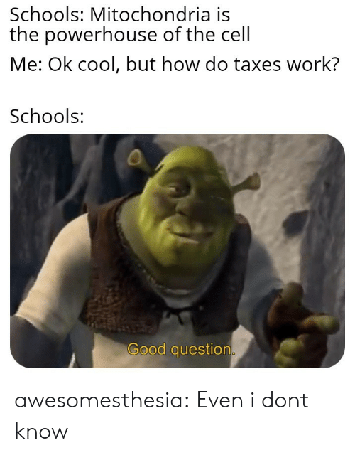 Tumblr, Taxes, and Work: Schools: Mitochondria is  the powerhouse of the cell  Me: Ok cool, but how do taxes work?  Schools:  Good question awesomesthesia:  Even i dont know