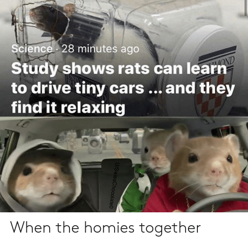 rats: Science 28 minutes ago  Study shows rats can learn  to drive tiny cars... and they  find it relaxing  OND  U/SwissChocolate0 When the homies together
