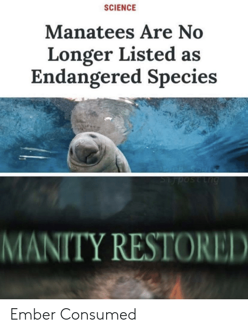 Endangered: SCIENCE  Manatees Are No  Longer Listed as  Endangered Species  Lng  MANITY RESTORED Ember Consumed