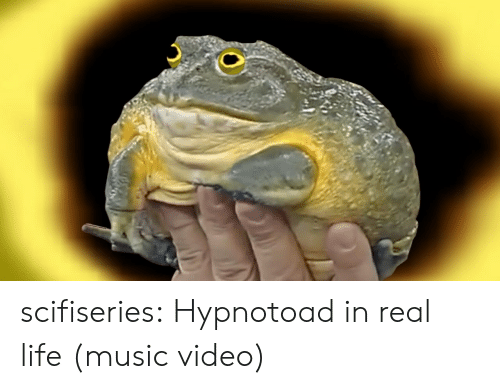 Music Video: scifiseries:  Hypnotoad in real life (music video)