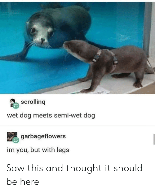 Saw, Thought, and Dog: scrolling  wet dog meets semi-wet dog  garbageflowers  im you, but with legs Saw this and thought it should be here
