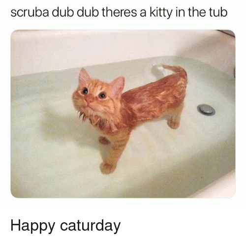 Caturday, Memes, and Happy: scruba dub dub theres a kitty in the tub Happy caturday